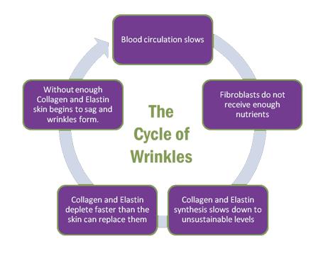 wrinkle cycle