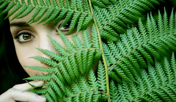 fern extract