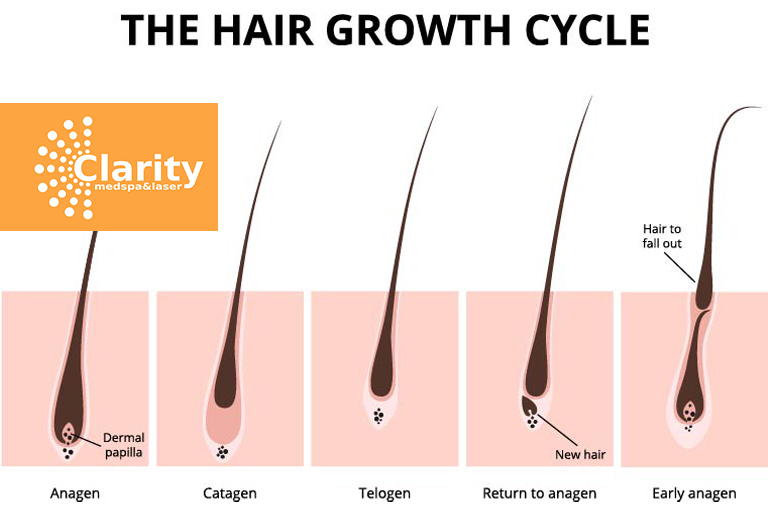 An insider scoop on the growth of your hair